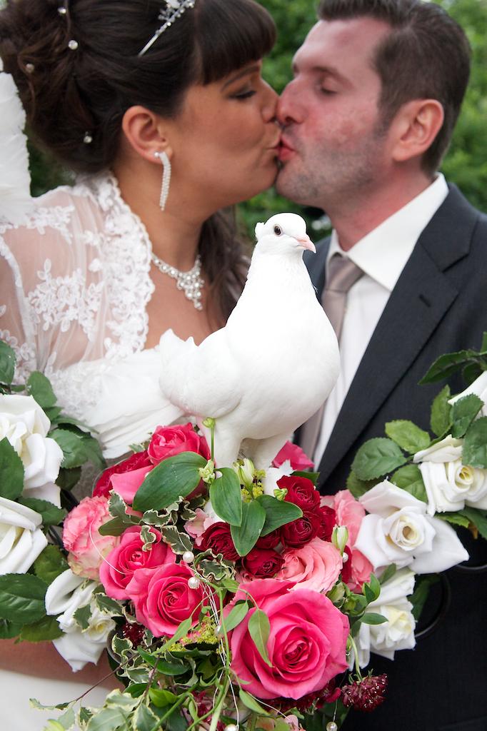 Hochzeitstaube